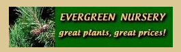 Evergreen Nursery Coupon Code