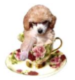 Teacup Fashions Boutique Coupon Code