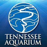 Tennessee Aquarium coupon code